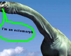 ectomorph neck