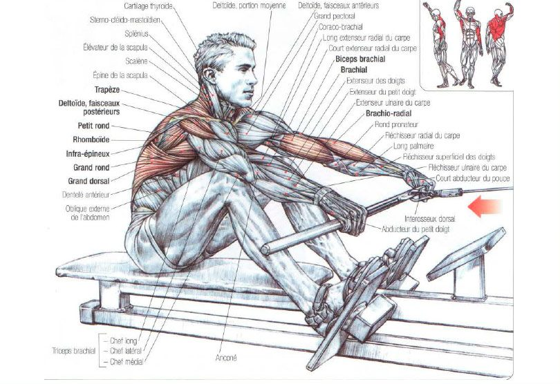 muscles used in rowing machine