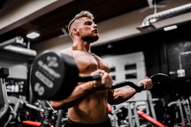 rapid muscle synthesis for novices